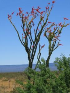 Pretty Unidentified Plant In The Mojave Desert