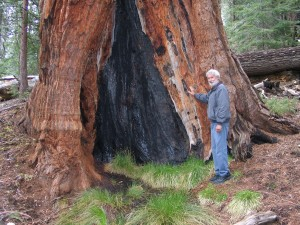 For Some Reason Jim Insisted It Was Too Wet To Stand Inside This Sequoia